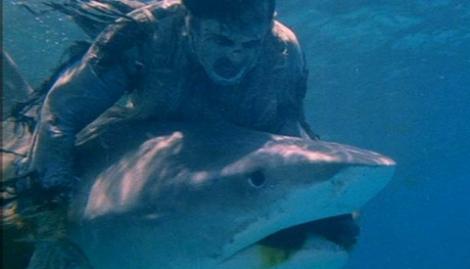 zombie flesh eaters shark